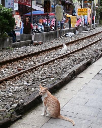台湾旅行2014-02-9.jpg